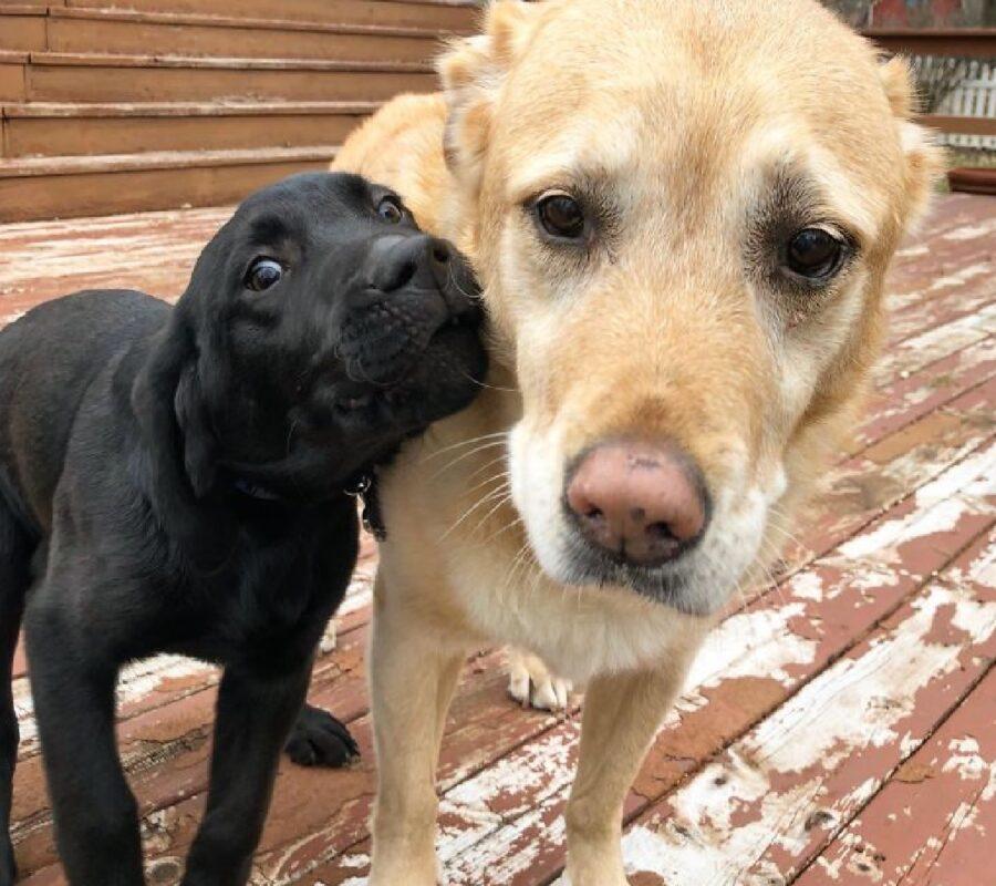 cane nero vicino amico chiaro