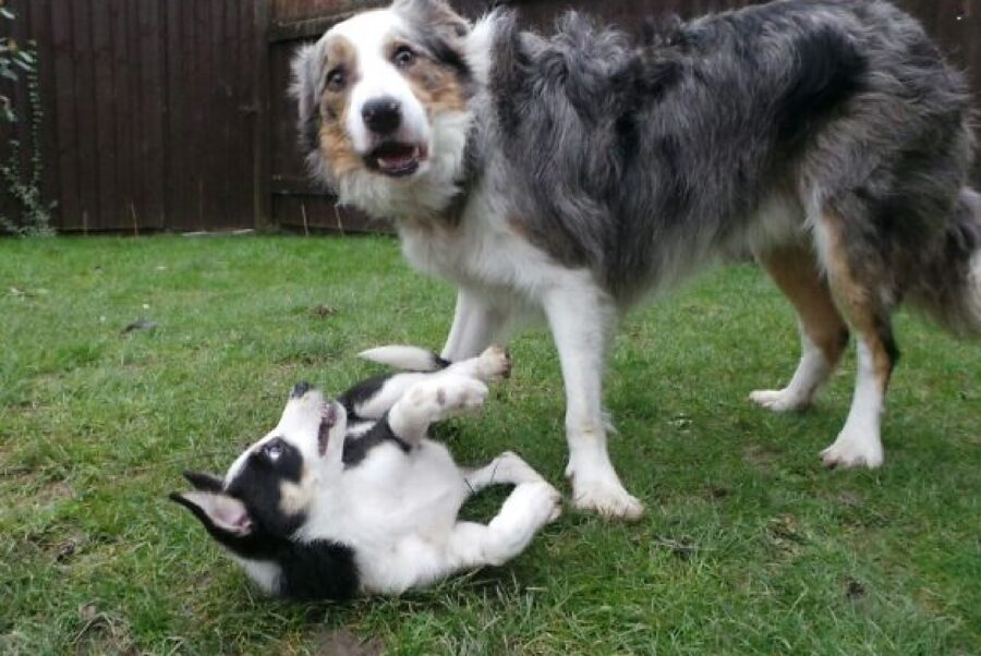 cane che butta a terra amico