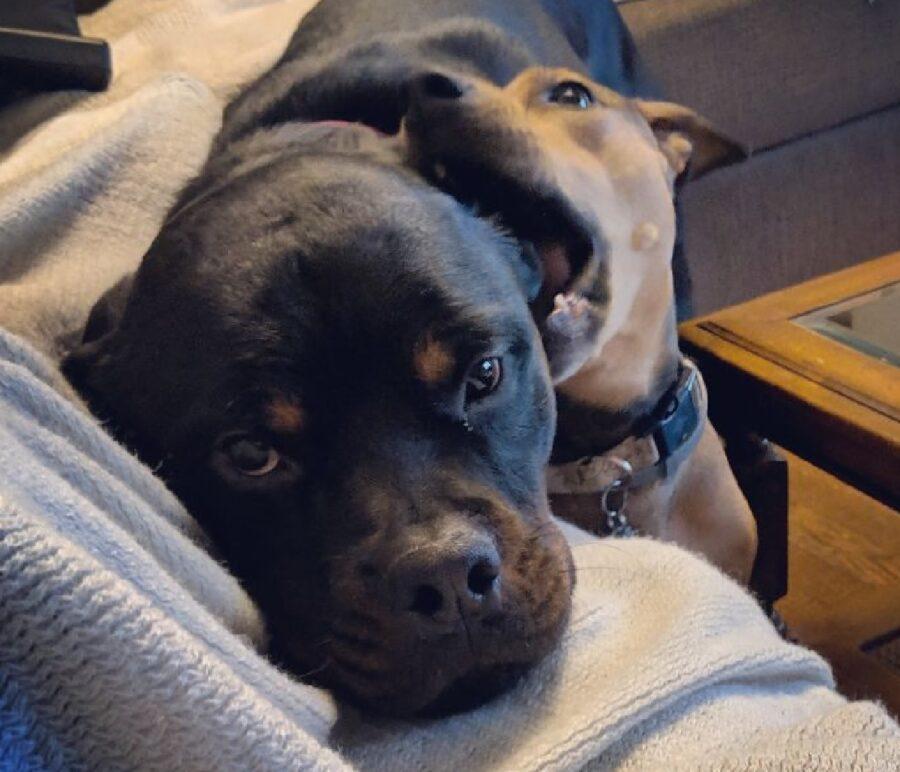 cane morde orecchio amico