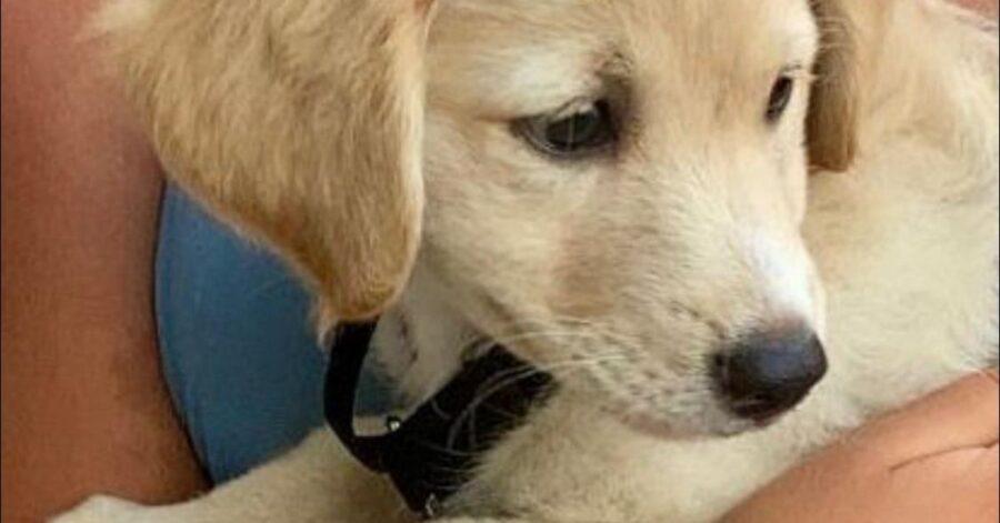 primo piano di un cucciolo