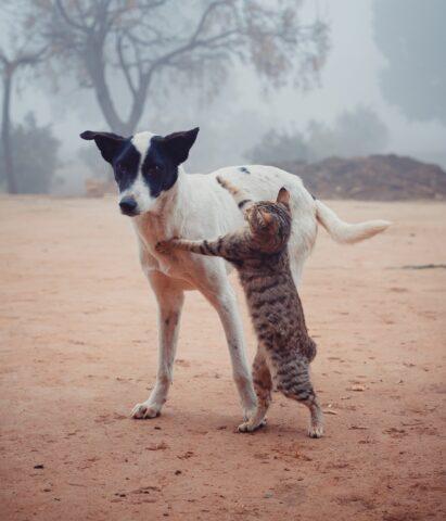 cane subisce agguato dal gatto