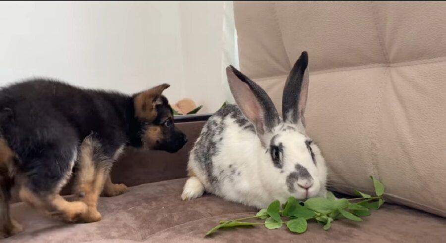 primo incontro cagnolino e coniglio