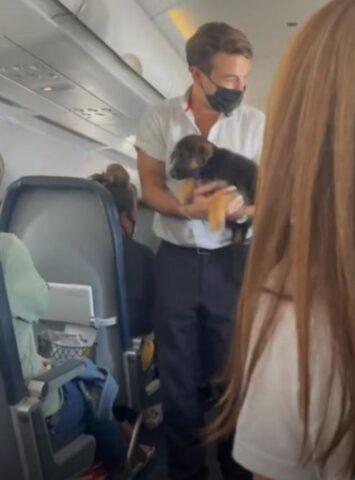 cucciolo in aereo