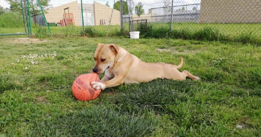 cane che morde un pallone