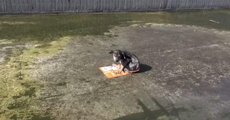 cane galleggia su un fiume