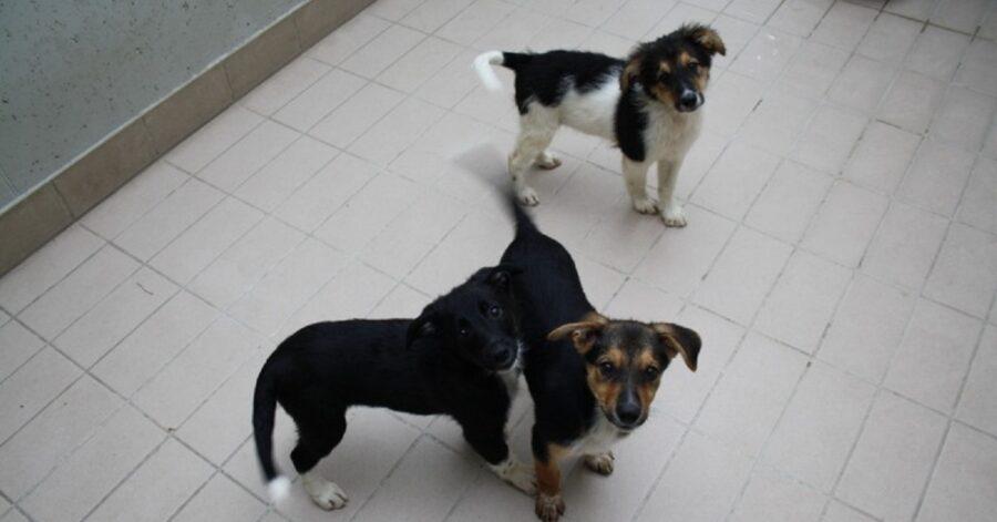 cagnolini dal pelo nero e marrone