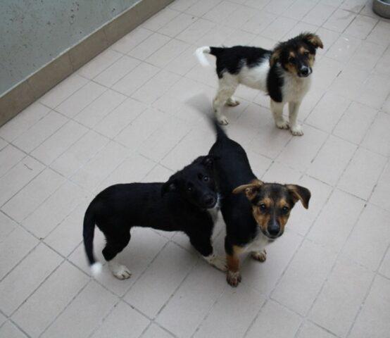 Juno e Bud cercano una famiglia