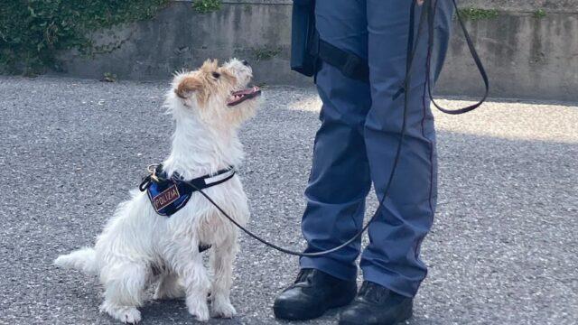 leone cane poliziotto