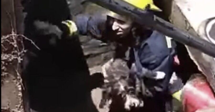 pompieri salvano un cane in una fogna