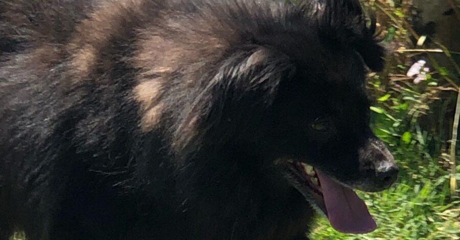 cane dal pelo folto e nero