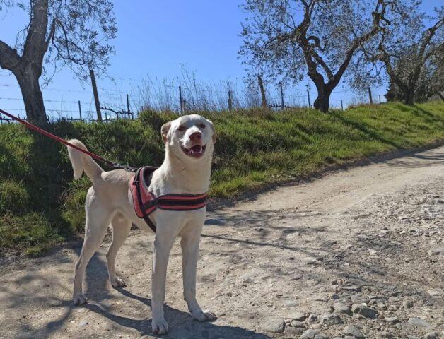 cane bianco libero