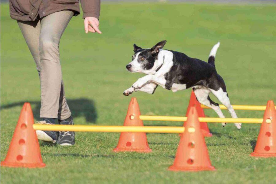 accessori per l'agility del cane