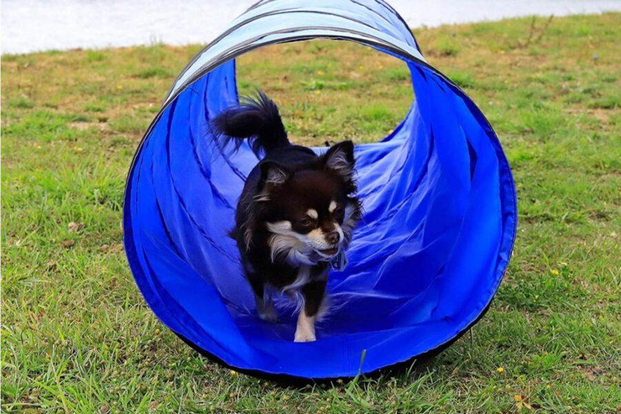 cane nel tunnel