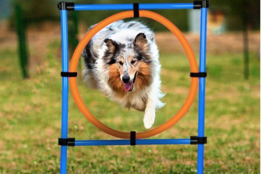 ostacolo a cerchio per cane
