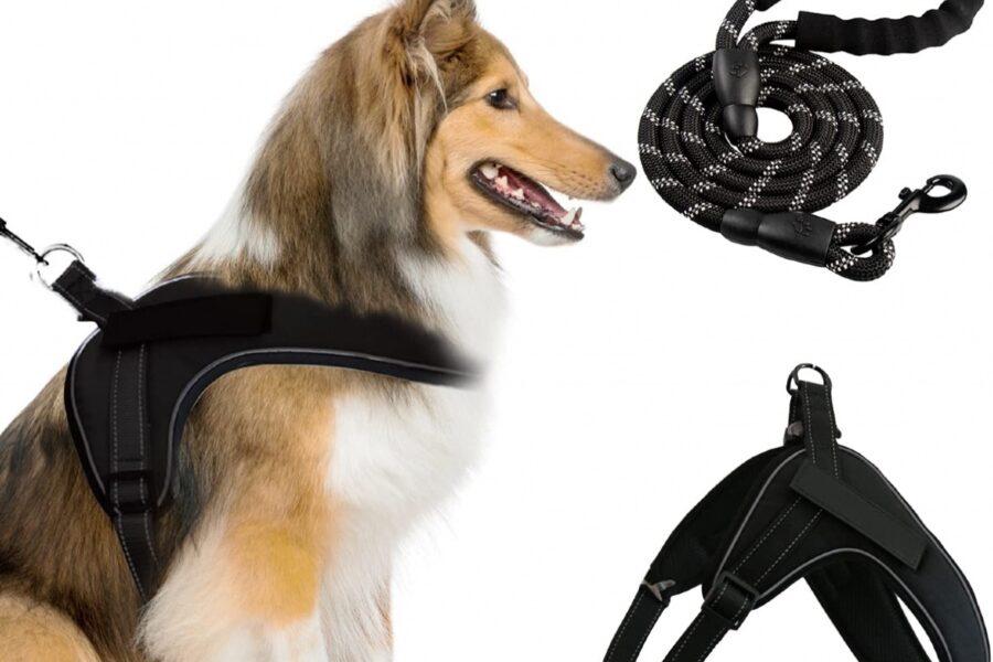 pettorina per il cane