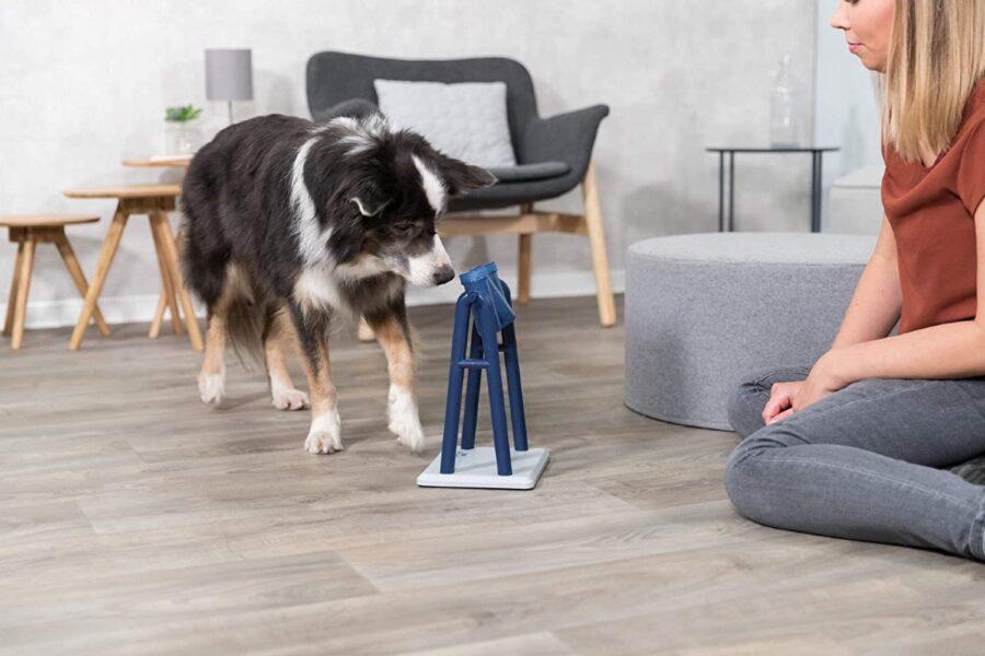 cane che gioca con la proprietaria