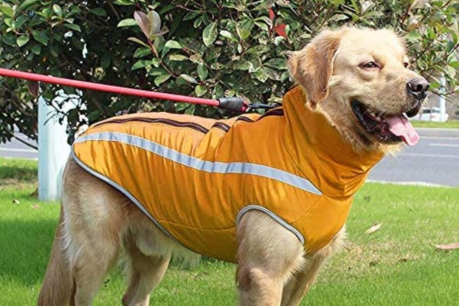 giubbotto impermeabile per cane