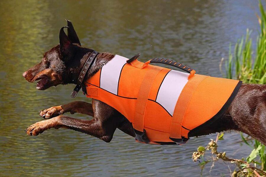 giubbotto di salvataggio per cane