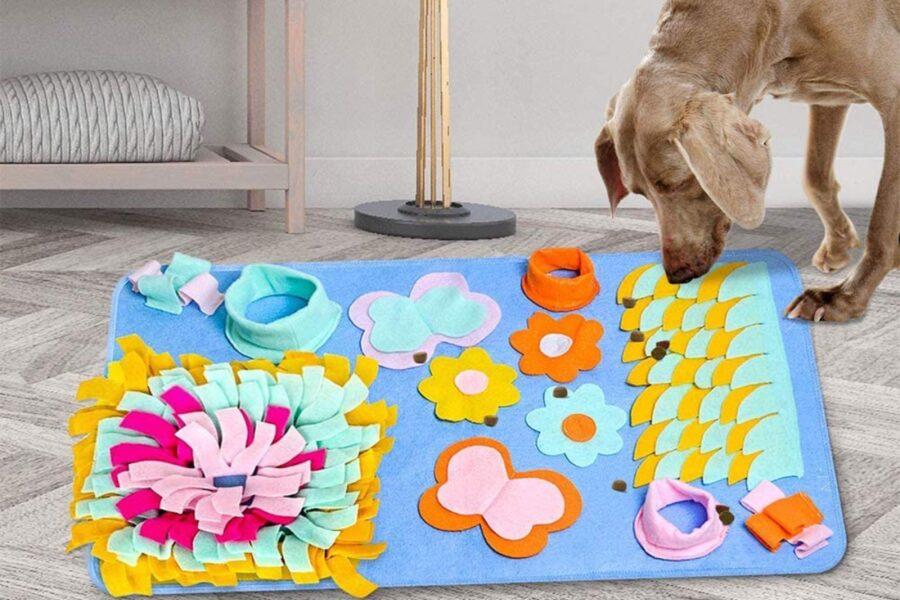 cane che gioca con tappeto interattivo