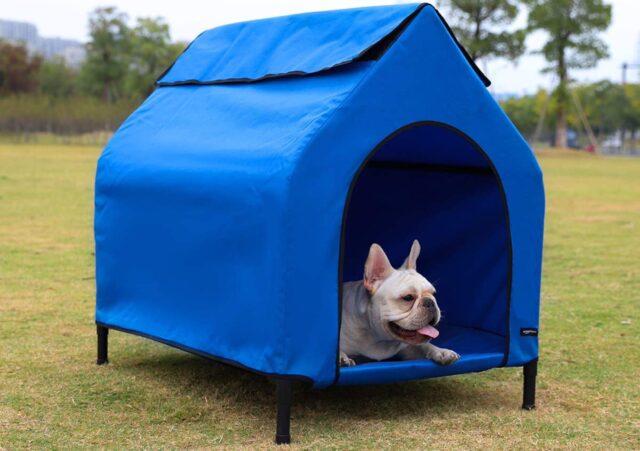 cane nella cuccia da esterno