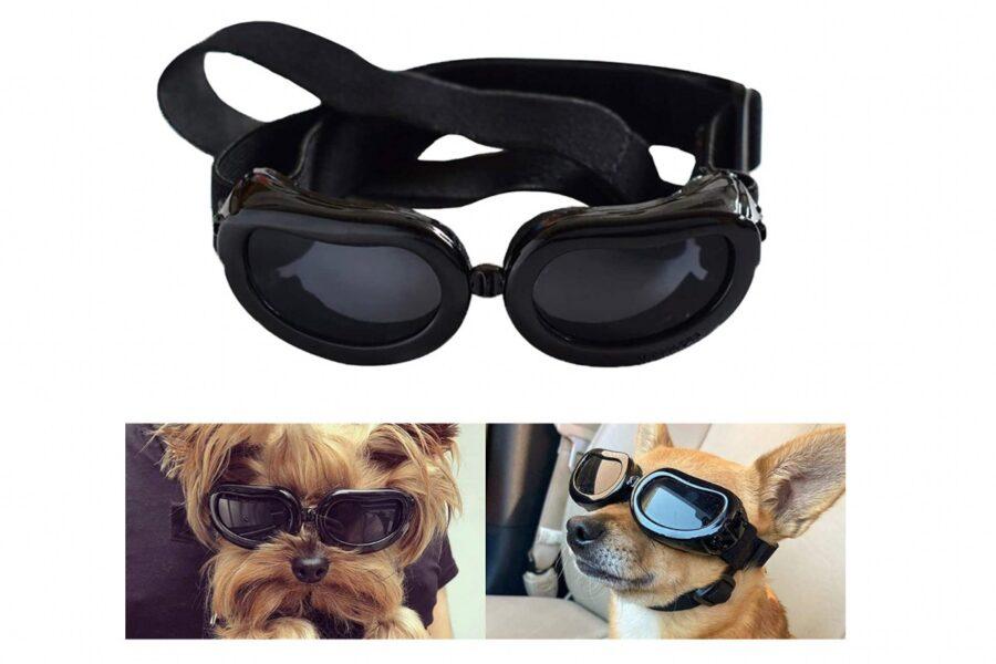 occhiali antivento per cani