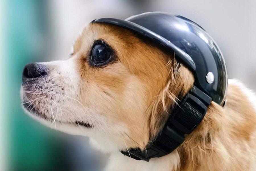 casco da moto per cane