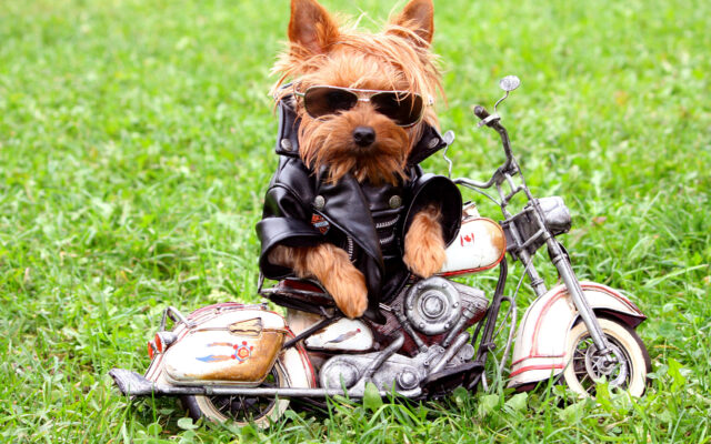 Yorkshire in moto