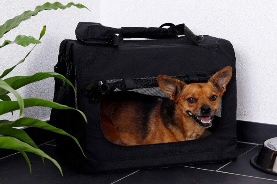 cane piccolo nel trasportino