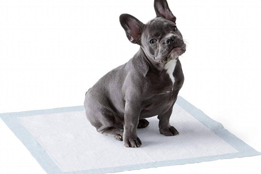 cane su un tappetino igienico