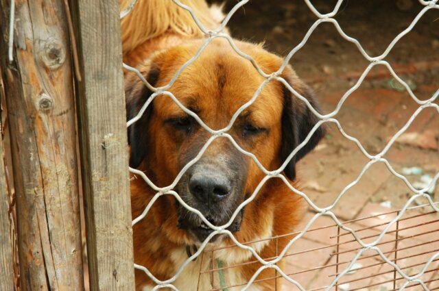 cane in un recinto