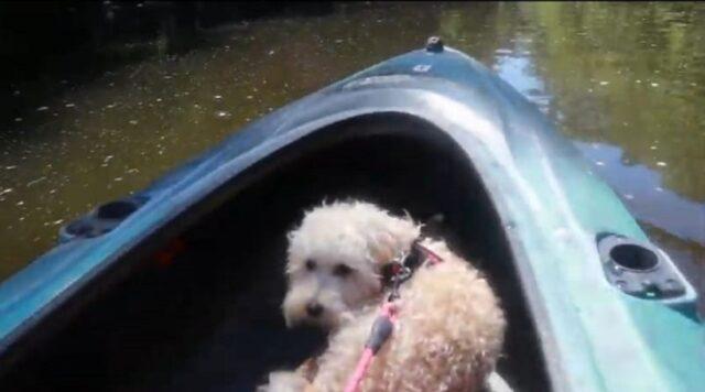 adorabile cucciolo fa kayak