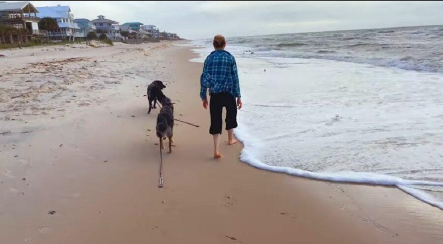 adorabili cagnoloni vedono la spiaggia per la prima volta
