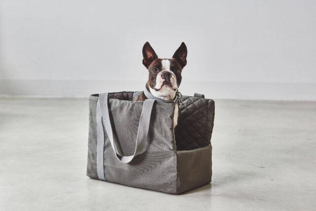 cane nella borsa