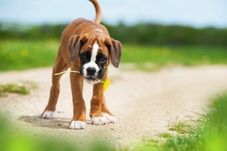 cane con fiore in bocca