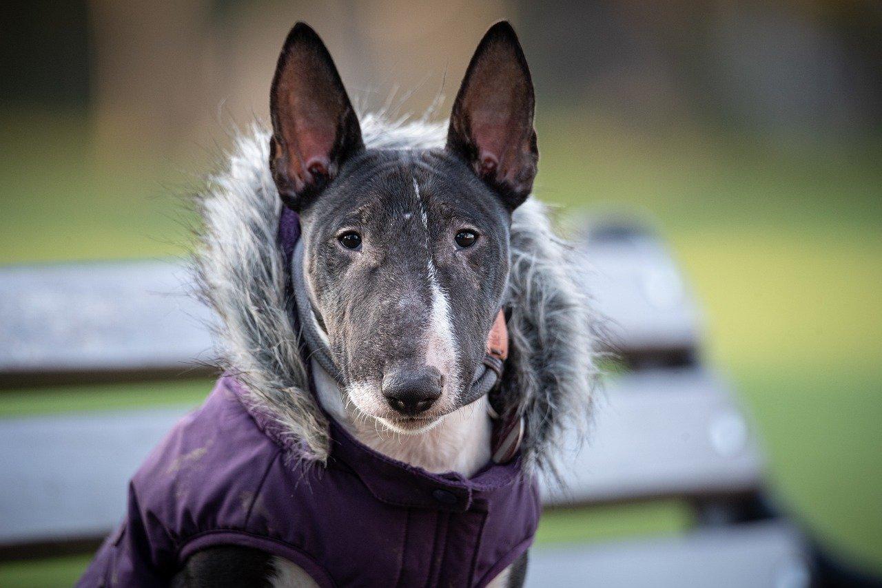 cane con cappottino