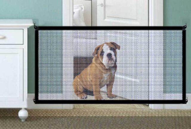 cane dietro un cancello