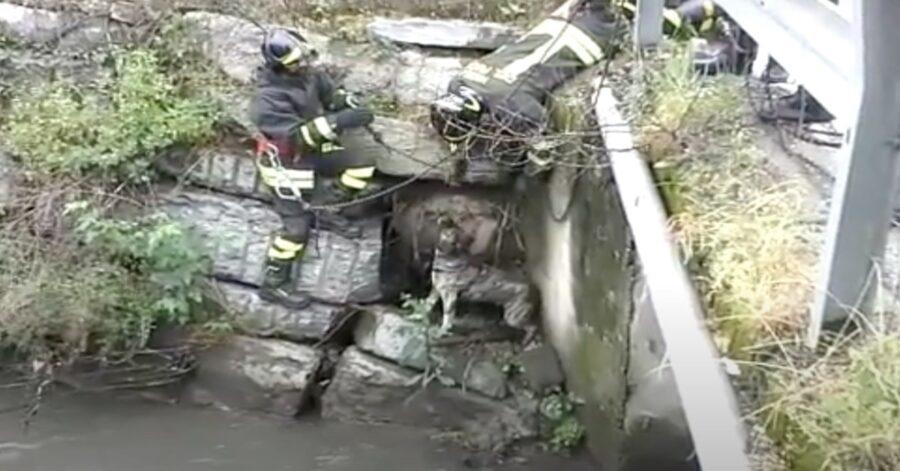 i pompieri salvano un cane caduto in un torrente