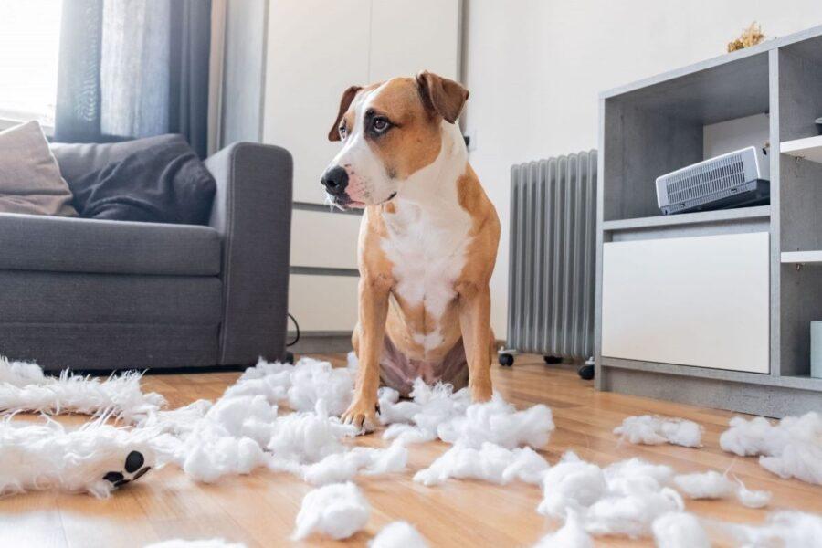 cane che ha distrutto la tappezzeria