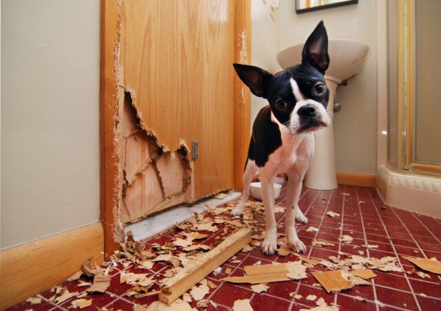 cane ha distrutto la porta