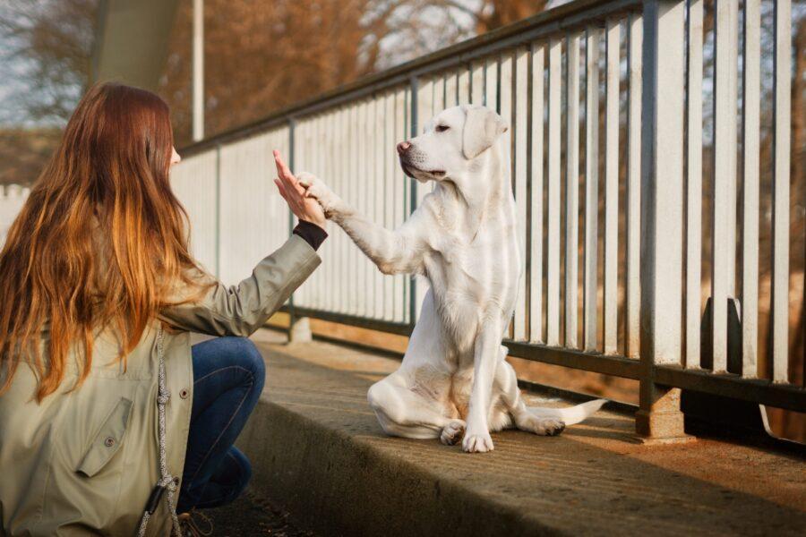 cane dà la zampa