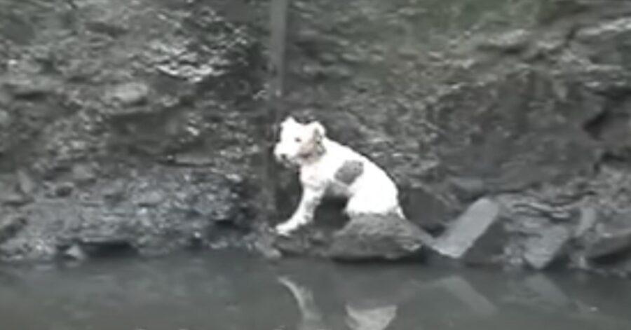 cane sull'argine di un fiume