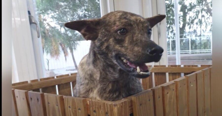 cane meticcio dentro recinto