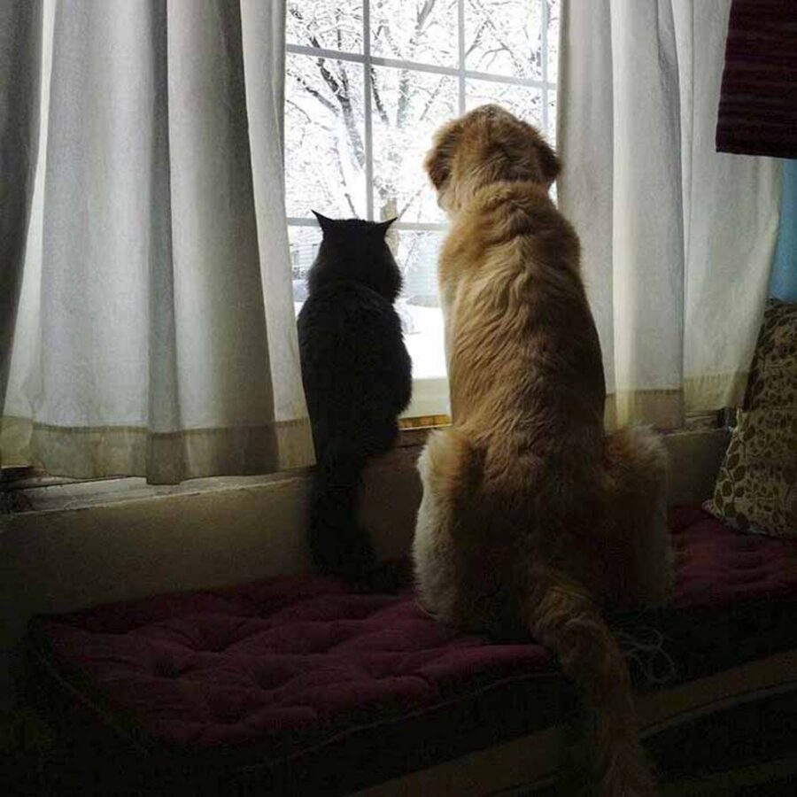 cane e gattino nero