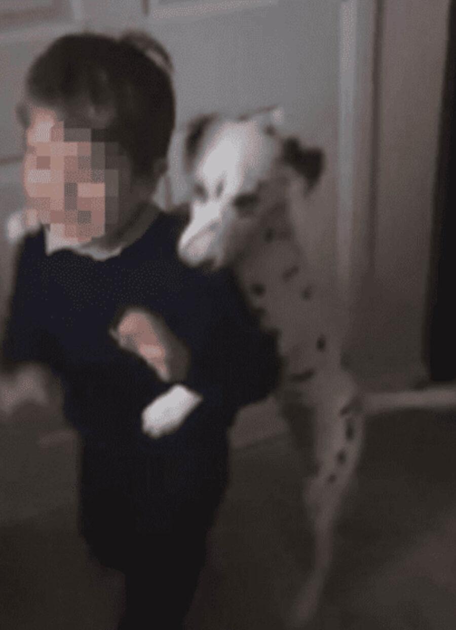 cane bianco e nero con bambino