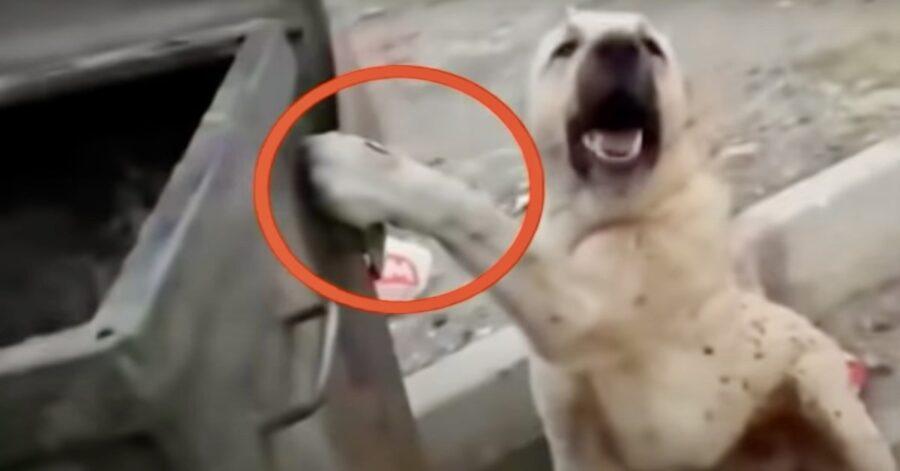 cane incastrato con la zampa