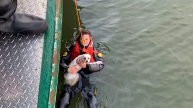 cane e padrone soccorsi