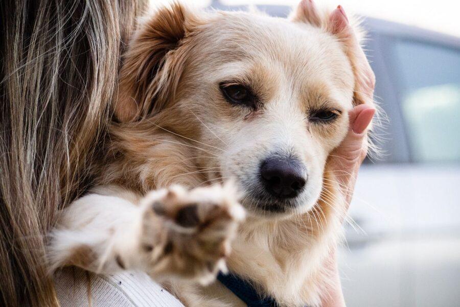 ragazza tiene in braccio il cane
