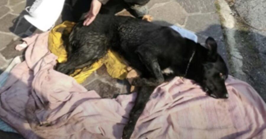 cane appena salvato dai pompieri