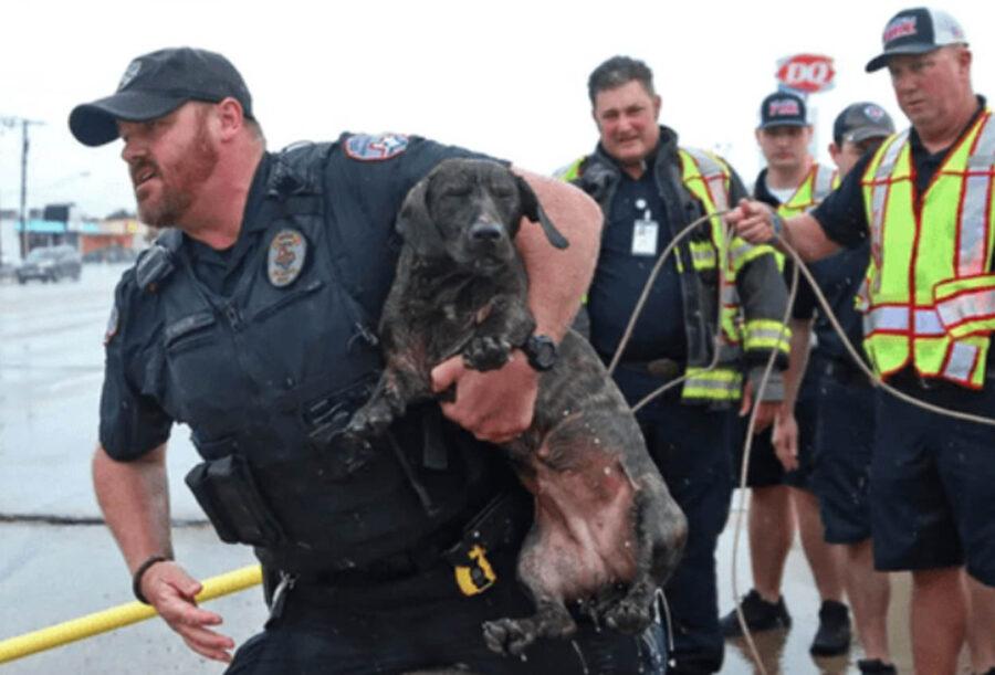 cane salvato dalla corrente del fiume