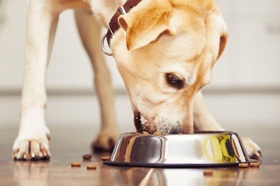 cane che mangia crocchette